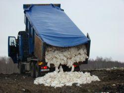 Полмиллиона кур уничтожат в Польше из-за птичьего гриппа
