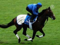 Еще 7 лошадей шейха Дубая не прошли допинг-тесты