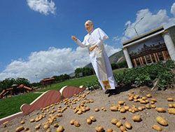 Статуя папы Франциска будет установлена на картофельном поле