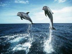 Индия запретила дельфинарии