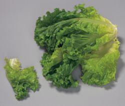 Ученые нашли в салате лекарство от рака