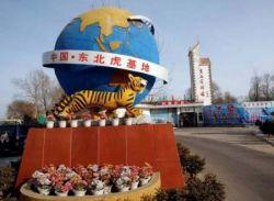 Японский парк с тиграми для экстремальных туристов (фото)