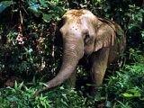 В джунгли Камбоджи зазывают богатых охотников
