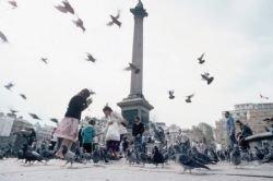 Трафальгарские голуби гибнут от голода