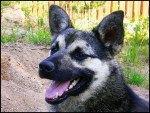 Израильтяне хотят повесить биометрические сенсоры на собак