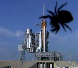 Гигантский паук напал на космический челнок? (видео)