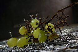 У российских бизнесменов - новая тенденция: свободные деньги теперь престижно вкладывать в развитие виноградства и виноделия