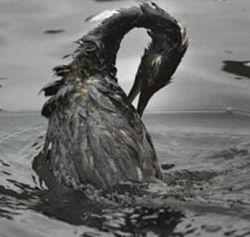 В Керченском проливе собрали все разлившиеся нефтепродукты