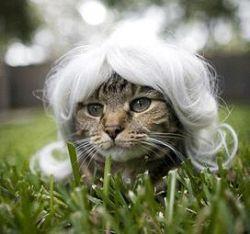 Парики для кошек Kitty Wigs (фото)