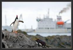 Австралийские авиалинии открывают первый регулярный рейс до Антарктиды