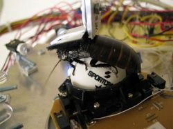 RoboPhilo — робот-гуманоид за 500 долларов (видео)