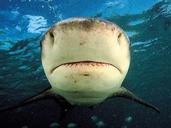 Новость на Newsland: США: акулы отняли у рыбаков весь улов