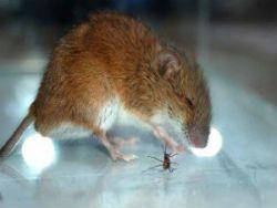 Новость на Newsland: Опасность - муравьи и мыши