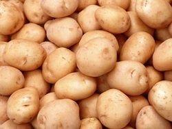 ЕС продолжает отправлять в Россию зараженный картофель