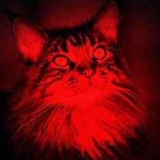 Шерсть клонированных котов светится красным
