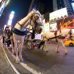 Нью-йоркские конные повозки запретят