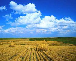 Росстат составил уникальную карту сельхозугодий России