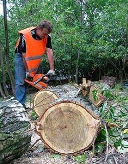 Кто и зачем спешит раздать 1950 га лучших лесных угодий Подмосковья?