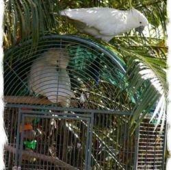 Удивительная история из жизни попугаев (фото)
