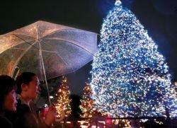 Японцы подключили рождественскую ёлку к электрическому угрю