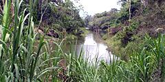 В джунгли Камбоджи пригласят состоятельных туристов