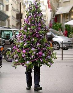 Лесные красавицы на улицах наших городов не доживают до Нового года