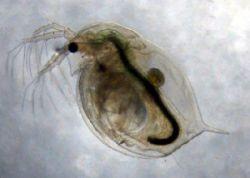 Современные паразиты опаснее прошлых и будущих