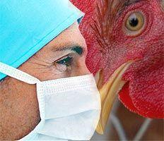 Очаг заражения птичьим гриппом выявлен в Германии
