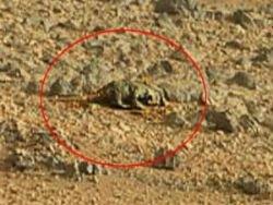Новость на Newsland: Откуда на Марсе птицы?