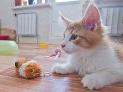 Новость на Newsland: Японские ученые выяснили, как домашние коты обманывают хозяев