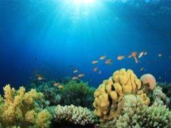 Новость на Newsland: Рифовые рыбы используют солнце в качестве компаса