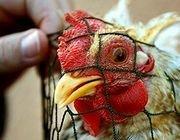 Литва запретила ввоз мяса и птицы из Германии