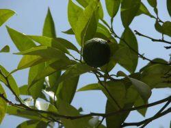 Диетологи признали лимон лучшим средством для очистки организма