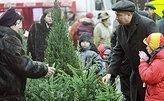 Ученые доказали, что новогодняя елка лучше сохраняется в сладкой воде
