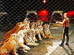Новость на Newsland: Возможен ли в России цирк без жестокости?