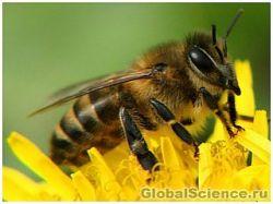 Новость на Newsland: Инсектициды меняют гены пчел