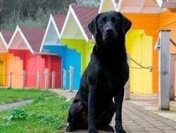 Новость на Newsland: Ученые выяснили, что собаки видят мир в цвете
