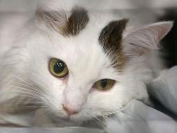 Новость на Newsland: Челябинцы судятся из-за кошки