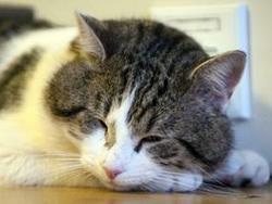 Новость на Newsland: Научные работники раскрыли тайна аллергической реакции на кошек