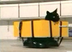 Необычное изобретение для кота-инвалида (видео)