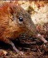 Деревья стали причиной исчезновения волосатых мамонтов
