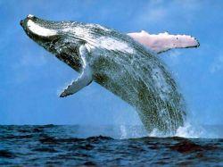 Древние киты ходили по земле Индостана
