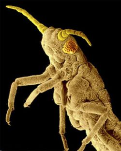 Эти жуткие животные. Самые страшные создания на планете (фото)
