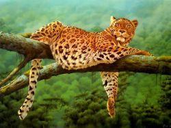 Леопард пытался защитить приморский заповедник от браконьеров