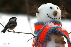 Снеговики во всех вариациях (фото)