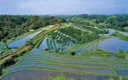 Нам нужно больше воды для выращивания культур?