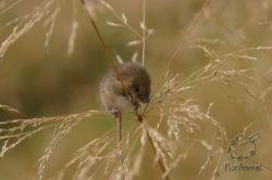Берлинские ученые сделали мышей нечувствительными к боли