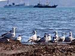Новость на Newsland: Россия предложила Японии совместно развивать Курилы