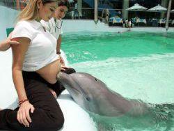 Новость на Newsland: Дельфины не хуже УЗИ могут диагностировать беременность