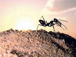 Новость на Newsland: Раскрыта причина нашествия летающих муравьев раз в году